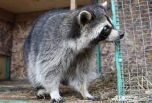 Фото Спасти обреченных. Как приют для диких животных изменил российские законы