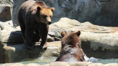 Фото В московском зоопарке после зимней спячки проснулись медведи