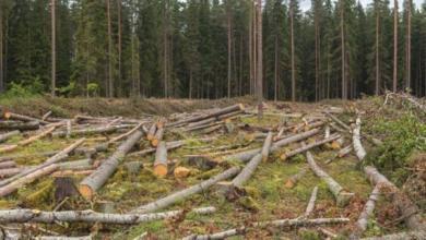 Фото Плата за кубометры. Как заставить восстанавливать лес после вырубок?