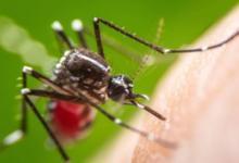 Photo of Едят заживо. Почему на Центральную Россию обрушились тучи комаров?