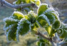 Фото В Подмосковье к концу недели ожидаются заморозки