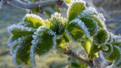 Photo of В Подмосковье к концу недели ожидаются заморозки