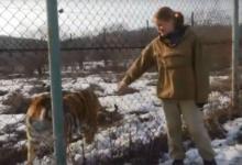 Photo of От волков до тигров. Таёжный ветеринар — о лечении диких животных