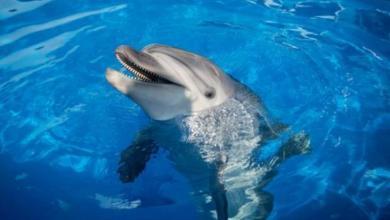 Фото «Спецназ» без погон. Правда и мифы о боевых дельфинах
