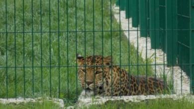 Фото В Нижнем Новгороде закроют зоопарк, где плохо обращались с животными