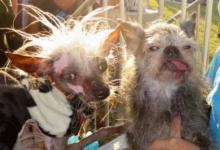 Фото В США выбрана самая уродливая собака