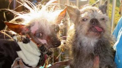 Photo of В США выбрана самая уродливая собака