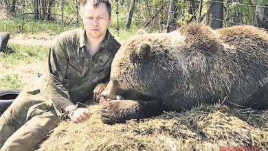 Фото Крылья для медвежонка. Как сегодня живёт косолапый, спасённый лётчиками?