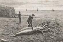 Photo of «Они съели мою девушку». Как легенды о морских чудовищах оказались правдой