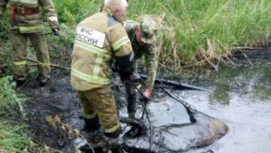 Фото Тонут в чёрном золоте. Как животных спасают из нефтяных ловушек