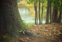 Фото СМИ: Китаю отдали под вырубку 200 млн. кубометров лесов в Томской области