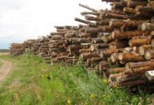 Photo of Госдума приняла закон о высадке деревьев взамен вырубленных