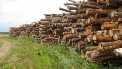 Фото Госдума приняла закон о высадке деревьев взамен вырубленных