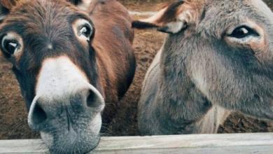 Фото Жители Альметьевска пожаловались на ночные крики осла из зоопарка