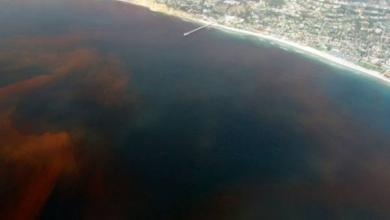 Фото Во Флориде объявлен режим ЧС из-за «красного прилива»