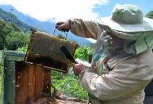 Фото «Американцы молча завидовали». Секреты русского пчеловода