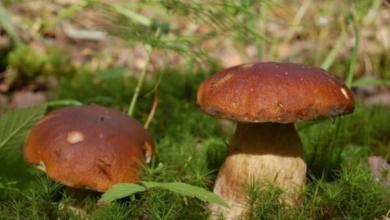 Фото Депутат Госдумы призвал возродить заготовительные конторы для сбора грибов