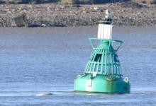 Фото Жители Лондона заметили в Темзе кита