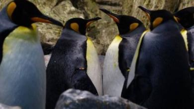 Фото Все популяции пингвинов сокращаются, но не вымирают, считает эксперт