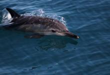 Фото Высшее звено. Стартовала морская экспедиция по изучению дельфинов