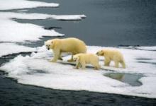 Фото WWF: численность диких животных сократилась на 60% за 40 лет