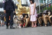Фото Туристы в Таиланде будут чаще проходить проверки иммиграционной полиции