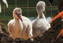 Фото Московский зоопарк подсчитал вылупившихся птенцов