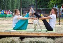 Photo of Йога с рогатыми. В Липецке тренировки проводят инструктор и… козы