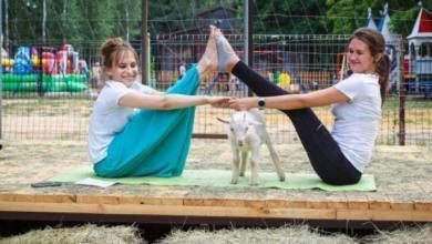 Фото Йога с рогатыми. В Липецке тренировки проводят инструктор и… козы