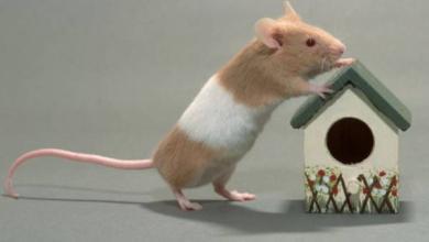 Фото Непрошеные гости. Защищаем дачу от мышей перед зимой
