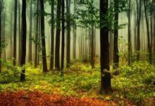 Фото Актуальная задача. В Москве специалисты обсудят состояние лесного хозяйства