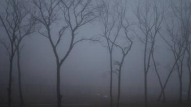 Фото МЧС предупредило жителей Москвы о сильном тумане