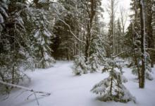 Фото Мыего теряем! Почему гибнет лес икак нам неостаться без нашего богатства