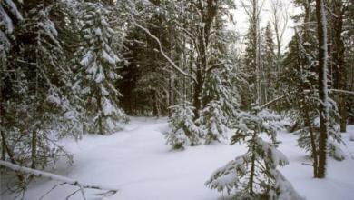 Photo of Мыего теряем! Почему гибнет лес икак нам неостаться без нашего богатства