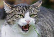 Фото Самую толстую кошку Великобритании четвертый раз вернули в приют