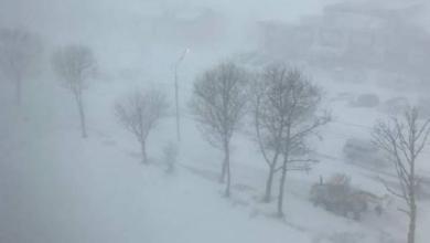 Фото МЧС предупредило москвичей об усилении ветра и метели