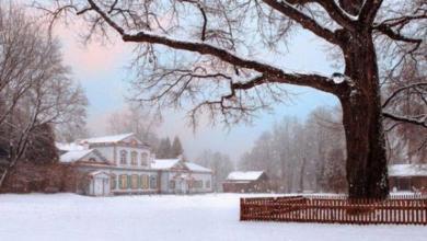 Photo of Дерево года. Российский дуб получил высшую европейскую оценку
