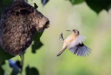 Photo of В Красной книге пополнение. В Амурской области живут два вида редких птиц