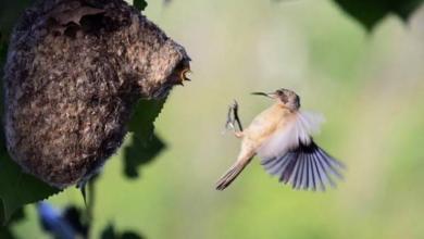 Фото В Красной книге пополнение. В Амурской области живут два вида редких птиц