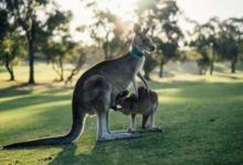 Фото В Австралии посадят 1 млрд деревьев в течение 30 лет