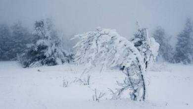 Фото В Москве «желтый» уровень погодной опасности продлен из-за сильного ветра