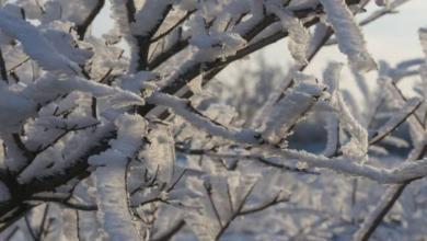 Фото Российские синоптики сообщили о новой волне резкого похолодания