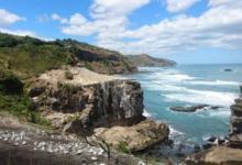 Фото Впервые за 20 лет у берегов Новой Зеландии появился редкий вид кита