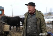 Фото Робинзон на Дону. Бездомный фермер 8 лет скитается с коровами по степи
