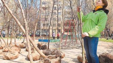 Фото Посадите родовое дерево. Как москвичи могут улучшить экологию города?