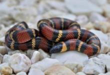 Photo of В «Аптекарском огороде» появилась молочная змея