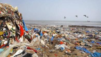 Фото К 2030 году объем пластиковых отходов в мировом океане может удвоиться