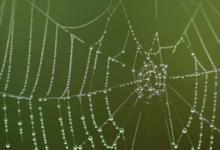 Фото Ученый открыл в Австралии три новых вида пауков-павлинов