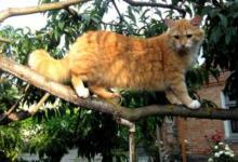 Фото Кошка на даче: везти нельзя оставить