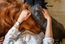 Photo of Не курить, не будить. 7 ошибок, которые совершают хозяева домашних животных